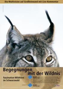 Plakat Naturpark Südschwarzwald «Luchs»